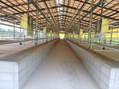 肥育牛舎・堆肥舎建設工事【通路】